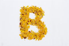 Spring Flower Letter concept of Marigold petal. Marigold petal alphabet isolated on white background. Letter B concept Logo. Beautiful character concept stock photography