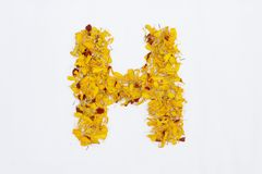 Spring Flower Letter concept of Marigold petal. Marigold petal alphabet isolated on white background. Letter H concept Logo. Beautiful character concept royalty free stock photo