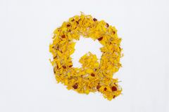 Spring Flower Letter concept of Marigold petal. Marigold petal alphabet isolated on white background. Letter Q concept Logo. Spring Flower Letter concept of stock image