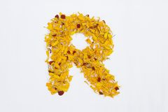Spring Flower Letter concept of Marigold petal. Marigold petal alphabet isolated on white background. Letter R concept Logo. Spring Flower Letter concept of royalty free stock image