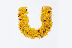 Spring Flower Letter concept of Marigold petal. Marigold petal alphabet isolated on white background. Letter U concept Logo. Spring Flower Letter concept of royalty free stock photos