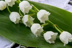 Spring flower a lily of the valley Royalty Free Stock Photos