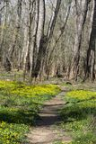 Spring flower lined trail stock image