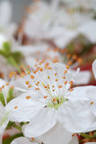 Spring flower macro. Extreme close up with fine details selective focus Stock Photo