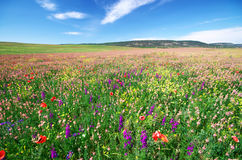 Free Spring Flower Meadow Royalty Free Stock Photos - 56315988