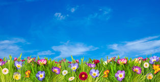 Spring flower meadow Royalty Free Stock Photo
