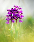 Spring flower on the meadow Stock Image