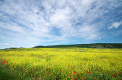 Spring flower meadow Stock Image
