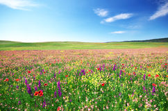 Spring flower meadow Stock Photo