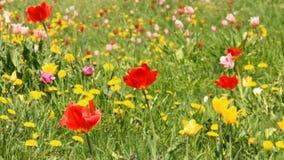 Spring flower meadow stock footage