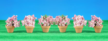 Spring flower miniatures Royalty Free Stock Photos