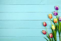 Spring flower of multi color Tulips on wood ,Flat lay image for holiday greeting card for Mother`s day,Valentine`s day, Woman`s. Day and copy space space for royalty free stock photo