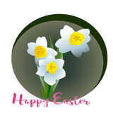 Spring flower narcissus for Happy Easter Stock Image
