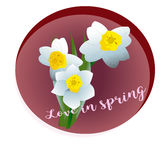 Spring flower narcissus Stock Photos