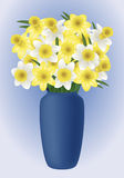 Spring flower - narcissuses Royalty Free Stock Photo