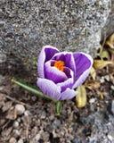 Spring Royalty Free Stock Photo