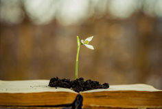 Spring flower in open book Royalty Free Stock Photography