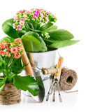 Spring flower in pail with garden tools Royalty Free Stock Image