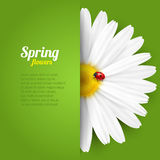 Spring flower in paper pocket Royalty Free Stock Photo