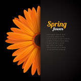 Spring flower in paper pocket Royalty Free Stock Photography