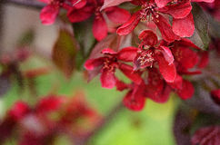 Spring flower paradise apple outdoors Royalty Free Stock Photo