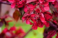 Spring flower paradise apple outdoors Royalty Free Stock Photography
