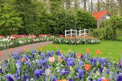Spring flower park Royalty Free Stock Photography