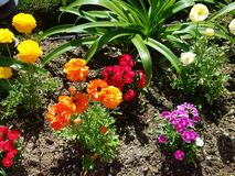 Spring flower patch in the sun 4k. Colored flowers in sunshine in UHD Stock Photos