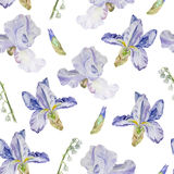 Spring flower pattern. Watercolor pattern with iris and lily of the valley on white background. Spring flowers pattern stock illustration