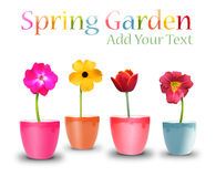 Spring Flower Pots on White Stock Photo
