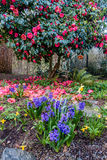 Spring Flower Profusion. A view of a variety of Spring flowers in full bloom. Shot take in Seatac, Washington stock photos