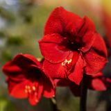 Spring flower in red stock images