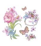 Spring flower's Stock Image
