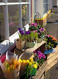 Spring flower sale Stock Photo