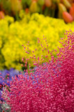 Spring flower season at Redmond farmer market Royalty Free Stock Photo
