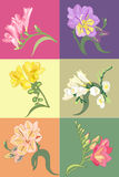 Spring flower set. Set of 6 decorative hand drown floral elements Stock Photography