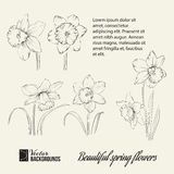 Spring flower set. Royalty Free Stock Photos
