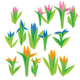 Spring Flower Set. Collection of First Spring Colored Flowers Royalty Free Stock Photography