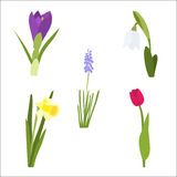 Spring flower set with tulip, daffodil, snowdrop Royalty Free Stock Image