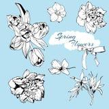 Spring flower set. Vintage floral collection Stock Image