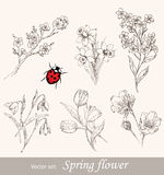 Spring flower set stock illustration