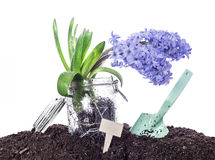 Spring - flower, shovel, garden tag and soil - isolated on white Royalty Free Stock Image