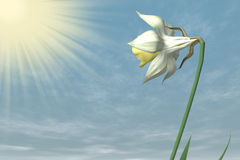 Spring Flower in the sky. Stock Images
