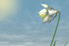 Spring Flower in the sky. Royalty Free Stock Photos
