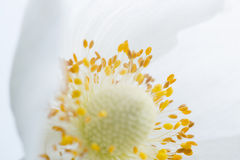 Spring Flower. Soft macro image. Royalty Free Stock Photography