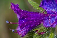 Spring flower in Spain Stock Image