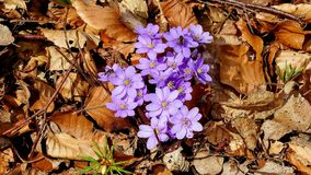 Spring flower, spring will welcome royalty free stock images