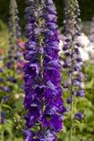 Spring flower stems in garden Royalty Free Stock Photos
