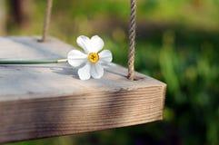 Spring Flower Swinging Stock Photo