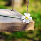 Spring Flower Swinging Royalty Free Stock Image